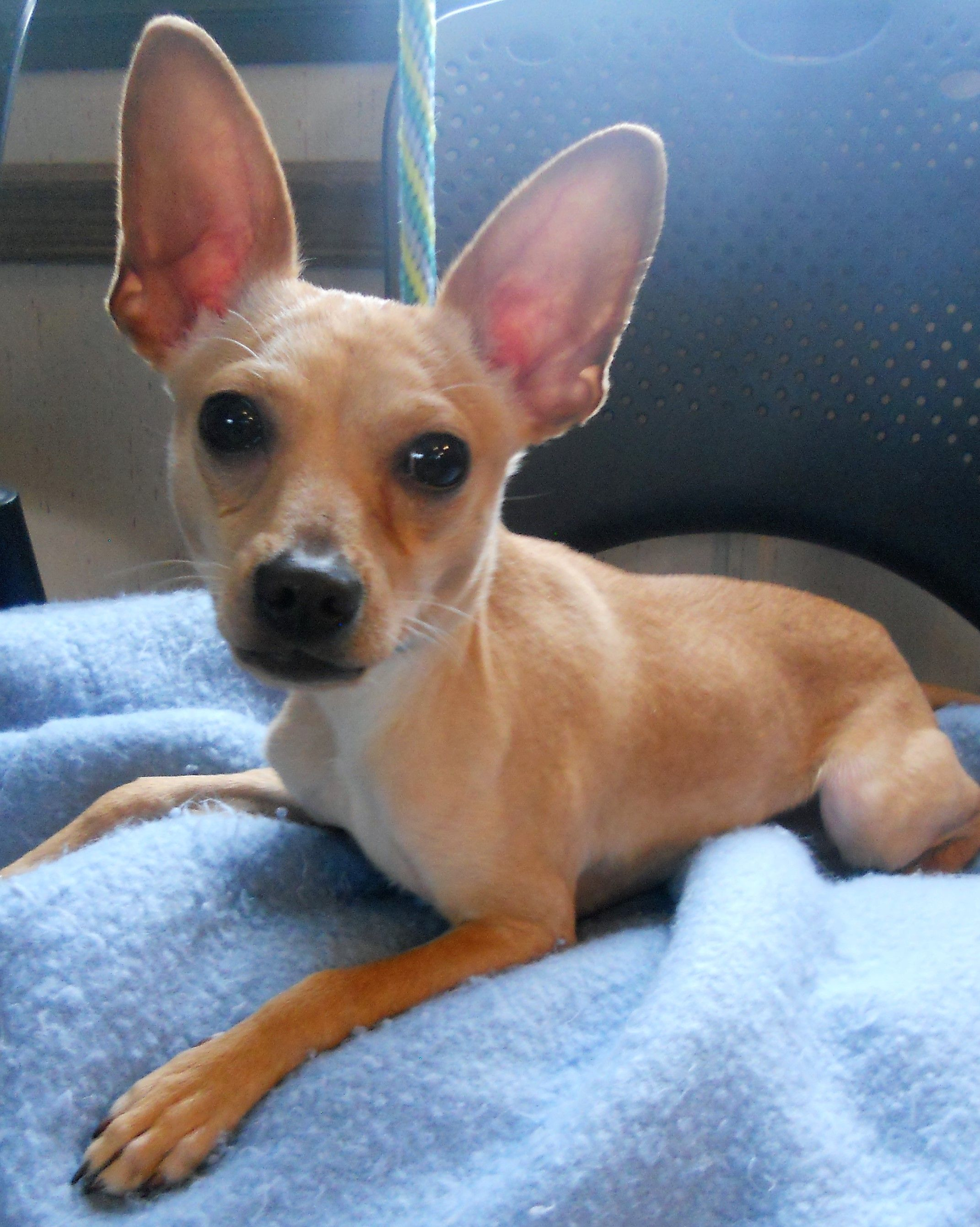 Chipin dog for Adoption in Siren, WI. ADN430433 on