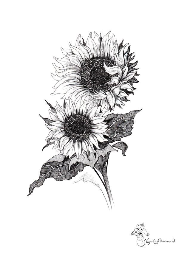 Sunflowers by CandyMermaid on DeviantArt