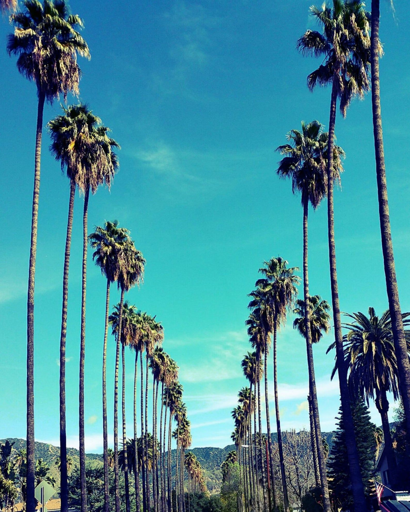 Palm Trees In Los Angeles California Palm Tree Lined Street Etsy In 2020 California Palm Trees Los Angeles Photography Los Angeles Palm Trees