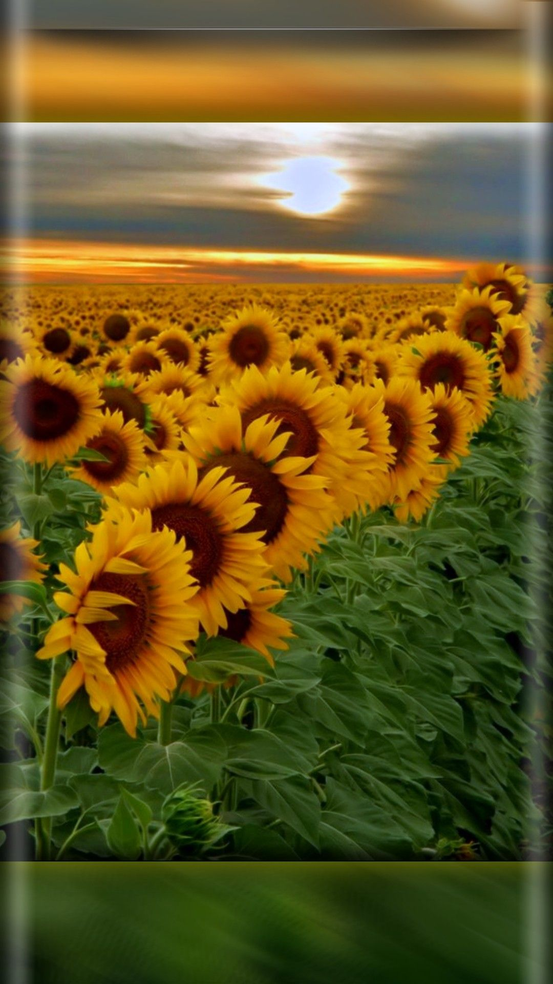 pinlena kas on wallpaper | pinterest | sunflowers, flowers and