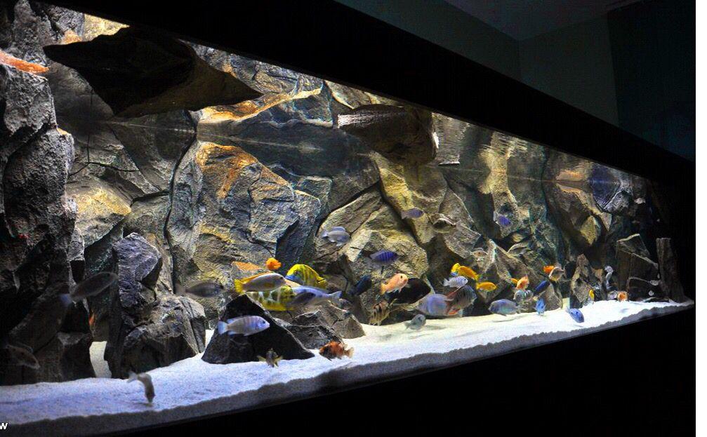 Aquadecor Malawi Aquarium 3d Backgrounds Fish Aquarium Decorations Aquarium Backgrounds Aquarium