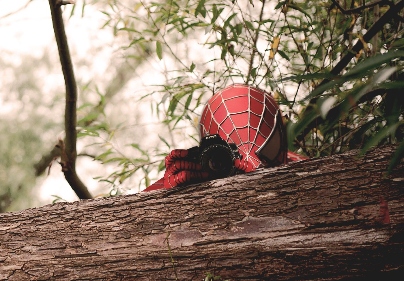 Spiderman Freelance Photographer
