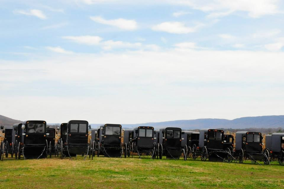 Buggies lined up at an Amish Wedding in PA~ Sarah's Country Kitchen ~