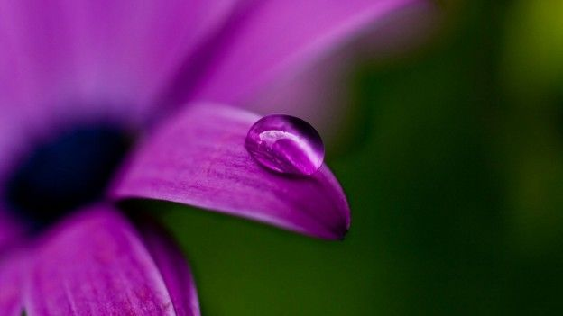 Beautiful Flowers Droplets Hd Wallpapers Free Download Flowers
