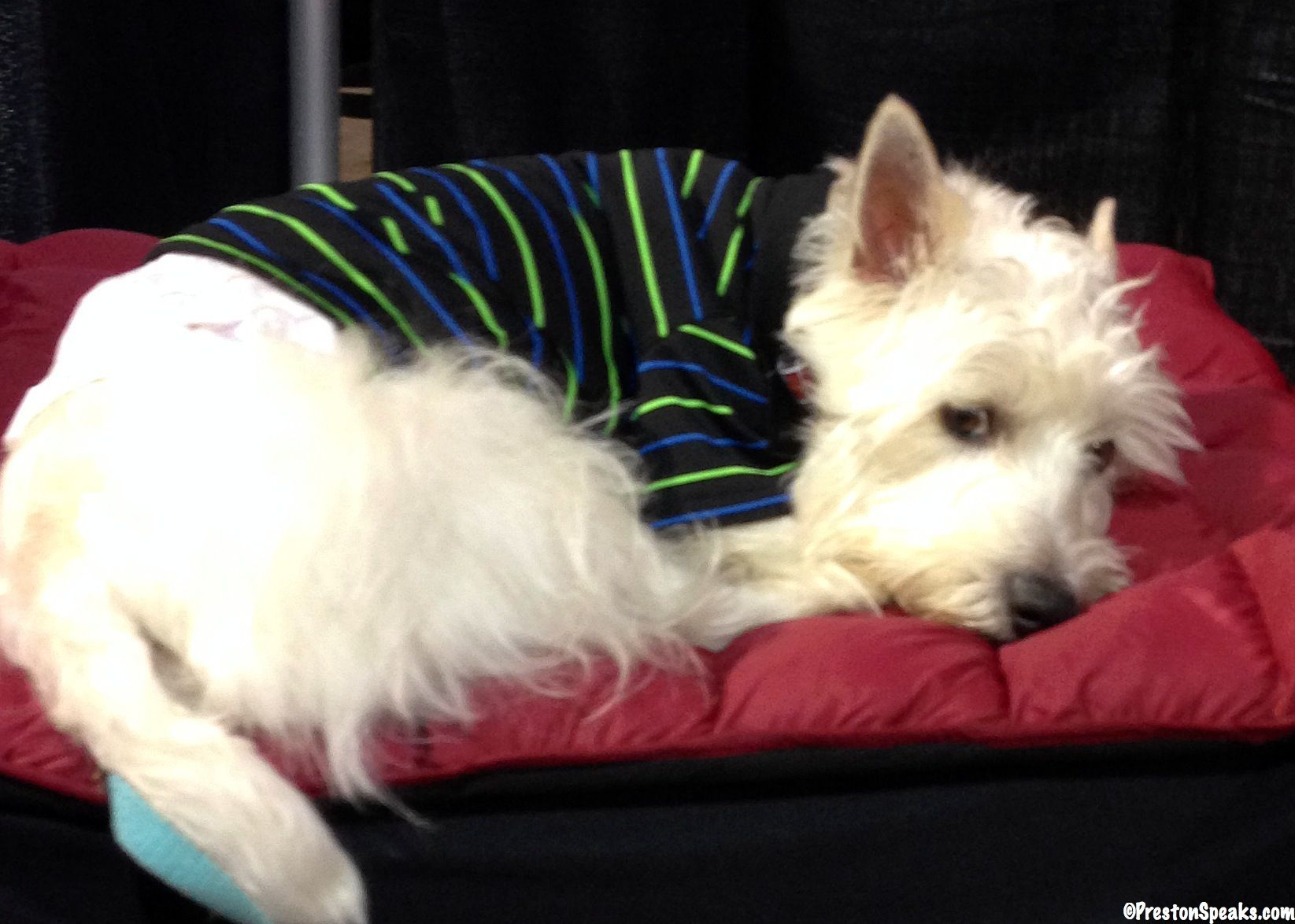 Pupyo Bed Review And Giveaway Closed Pets Bed Reviews Doggy
