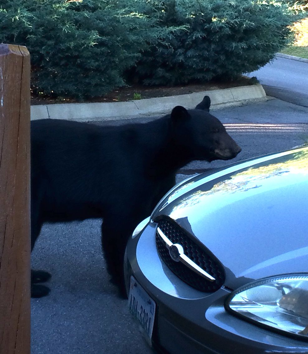 Yes, there really bears at Bear Creek Crossing Resort! | Favorite ...