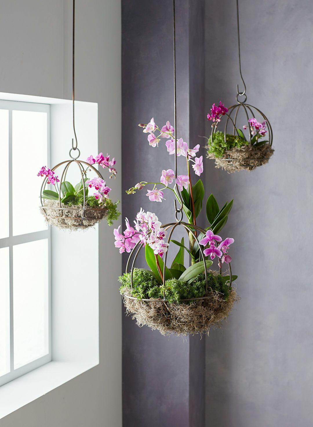 This Orchid Planter Project Will Be a Conversation Starter is part of Hanging plants indoor, Orchid planters, Hanging orchid, Hanging plants, House plants decor, Indoor orchids - This project can be done in an afternoon and makes it easy to show off your favorite orchid plants