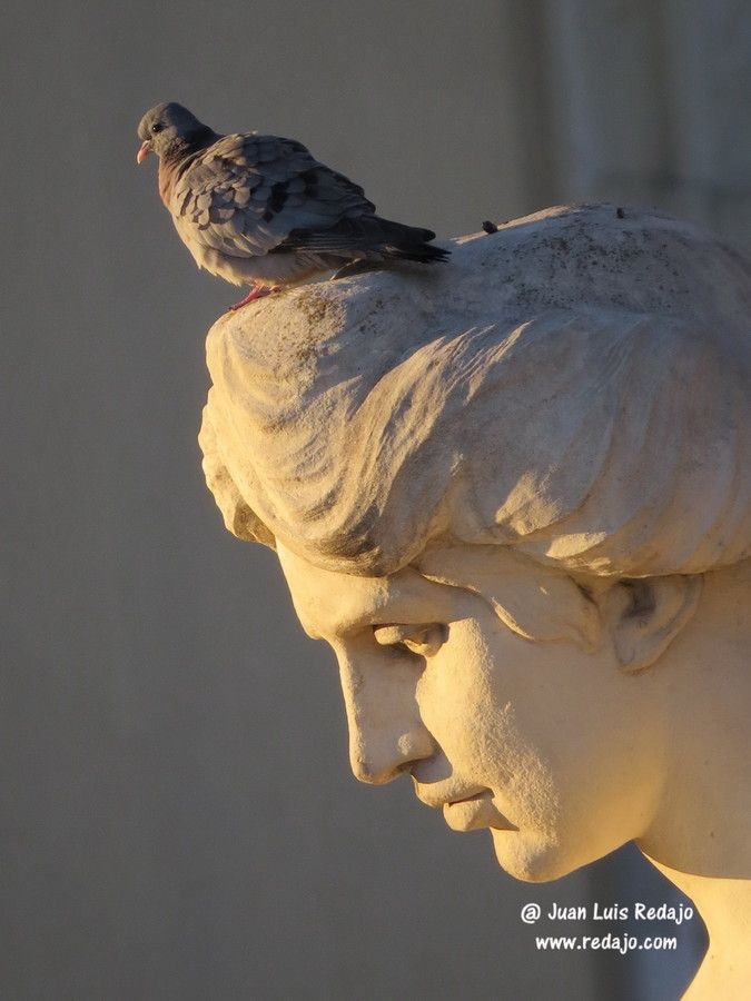 Dove at the sunrise in Metropolis Building. Madrid by Juan Luis Redajo on 500px
