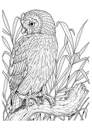 ausmalbild eule im hohen grass | vogel malvorlagen