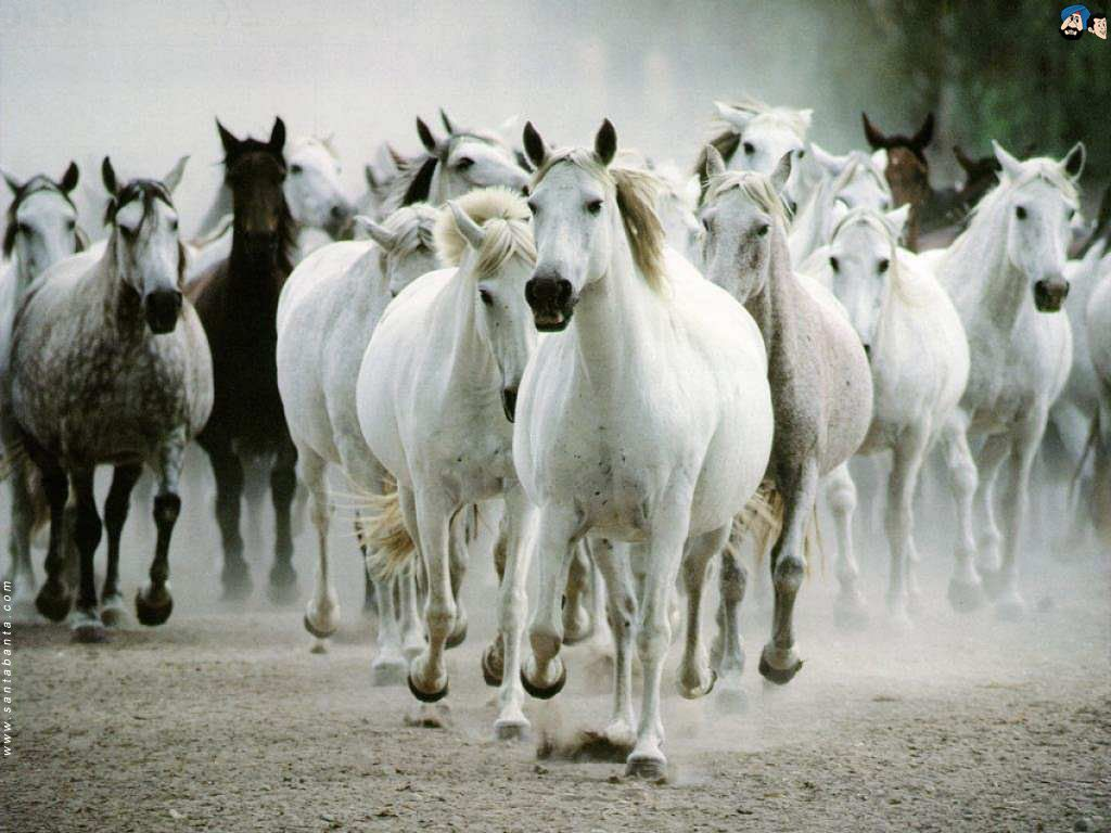 Animals Horses Wallpaper 1 Wallpapers Also Available In 800x600