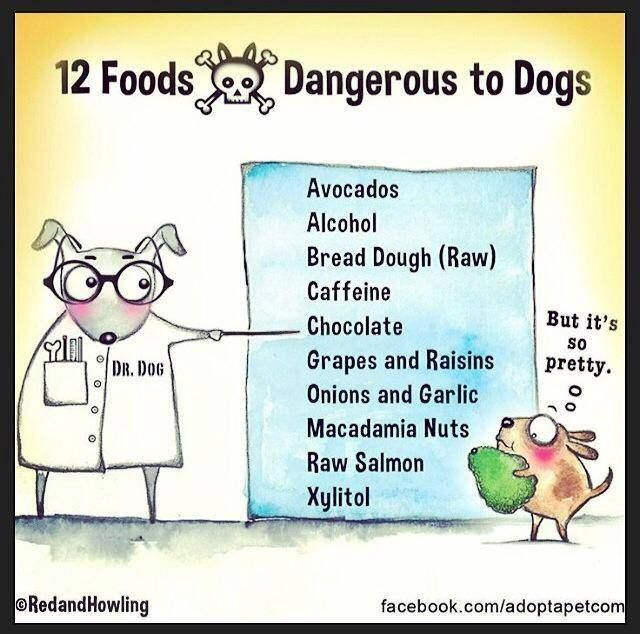 Dangerous to Dogs