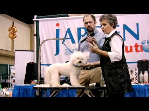 Judy Hudson Correctly Structuring A Bichon S Head And Neck Dog Grooming Salons Dog Business Bichon