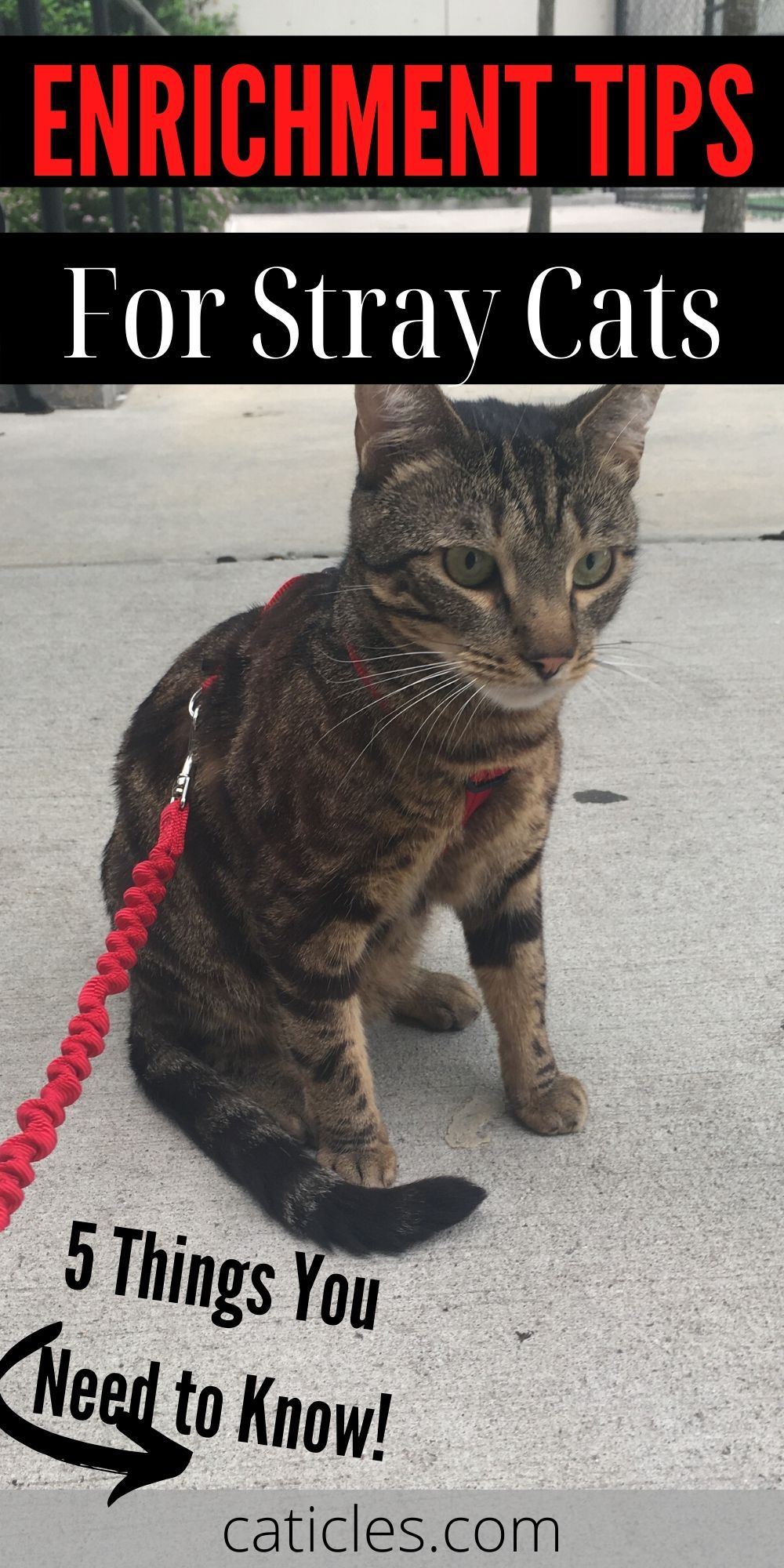 A Stray Cat Has Adopted Me 6 Things You Need To Do Cats Stray Cat Taking Cat