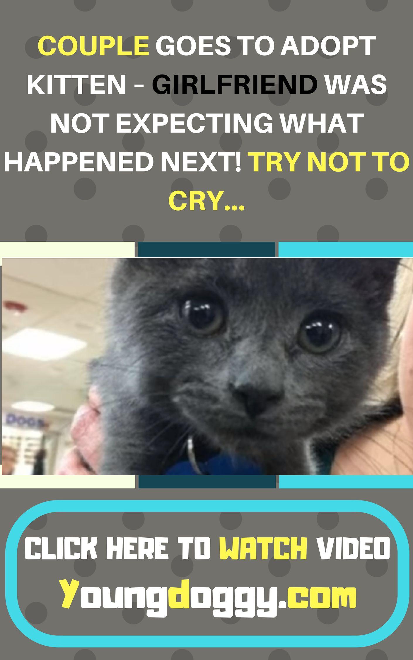 Cute Cat Kitten Rescue Video Stories Cat Rescue Ideas Rescue Pets Cat Rescue Stories Cat Rescue Animal Rescue Stories