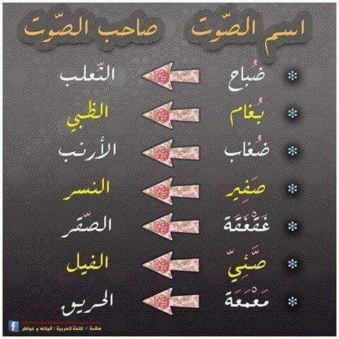 اسم الصوت وصاحبه Learning Arabic Arabic Language Arabic Langauge