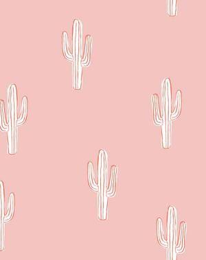 Cactus - Persimmon