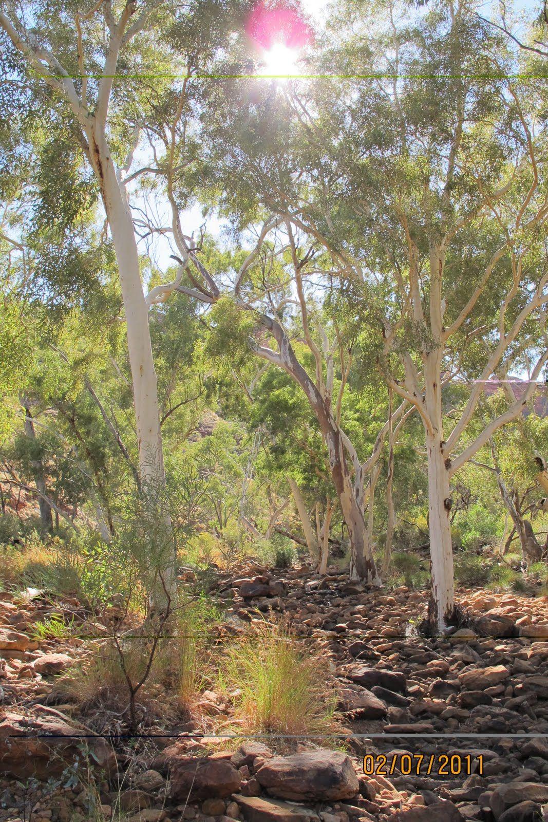 Kings Canyon http://jeanne-architectureanddesign.blogspot.com.au/
