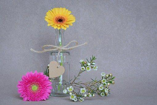 Bloemen, Gerbera, Gele, Roze
