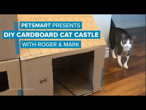 Petsmart Presents Diy Cardboard Cat Castle Youtube In 2020 Cat Castle Diy Cardboard Cat House Diy