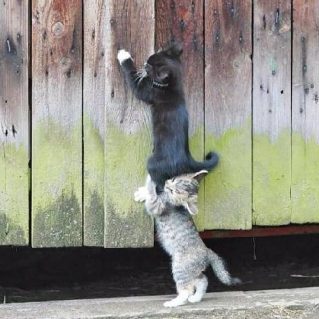 when you need a lift | Kittens cutest, Kittens, Cute animals