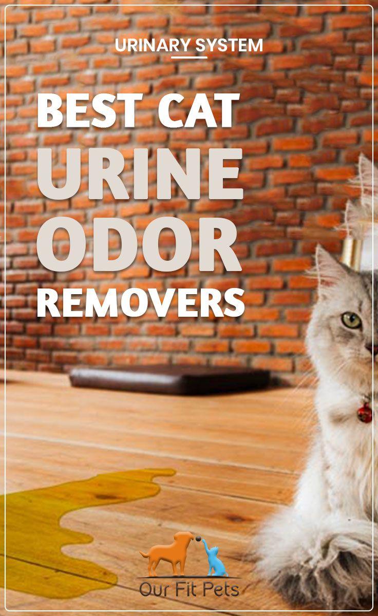 Best Cat Urine Odor Removers Cat Urine Cat Urine Smells