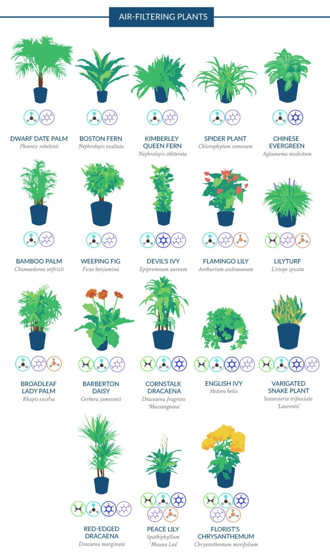Kaca2903 The Best Air Purifying Houseplants According To