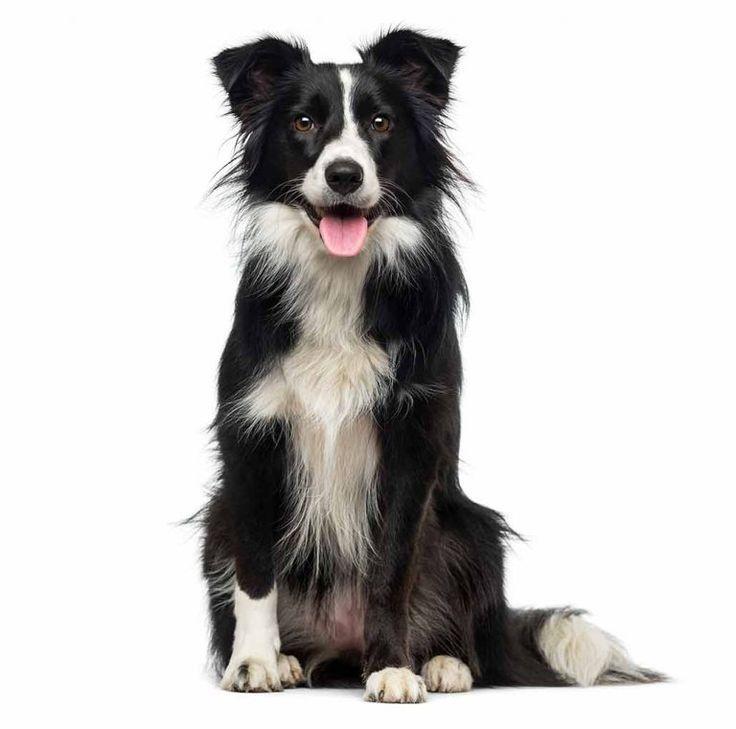 25 best dry dog foods 2019 guide dog food advisor