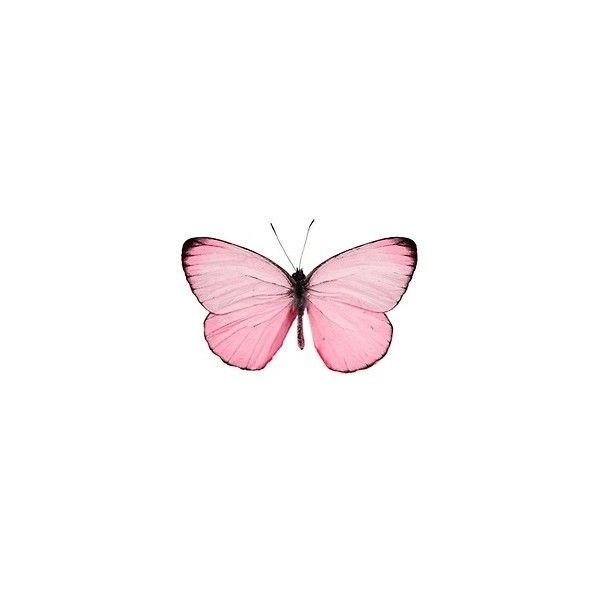 Pink Butterfly Tickled Pink Iphone Background Wallpaper Butterfly Wallpaper Pink Butterfly