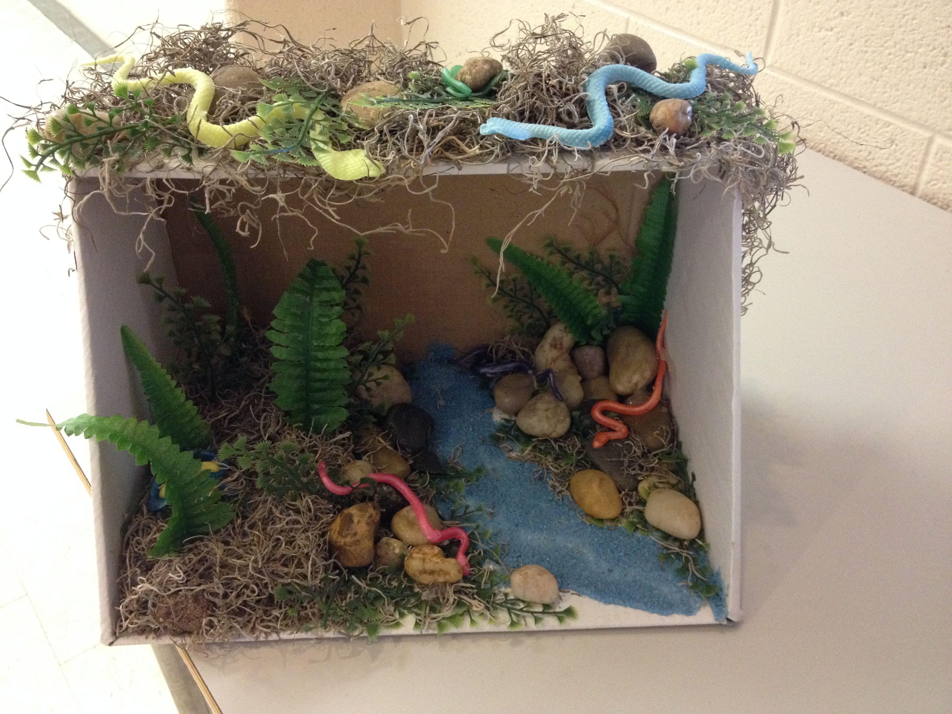 habitat diorama snakes dyi pinterest dioramas snake and school
