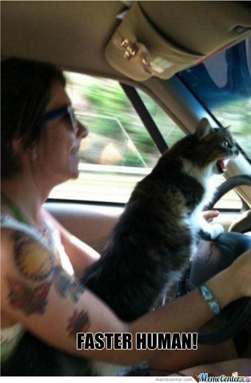 Drive Faster I Need My Litter Box Meme | Slapcaption.com