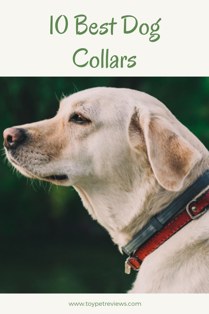 When Purchasing A Dog Collar You Need To Consider Your Pet S Size