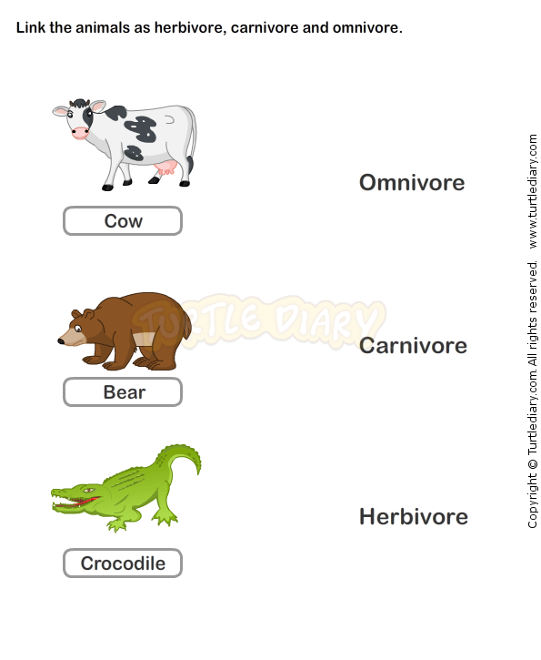 Food Chain Worksheet 3 Science Worksheets Grade 2 Worksheets