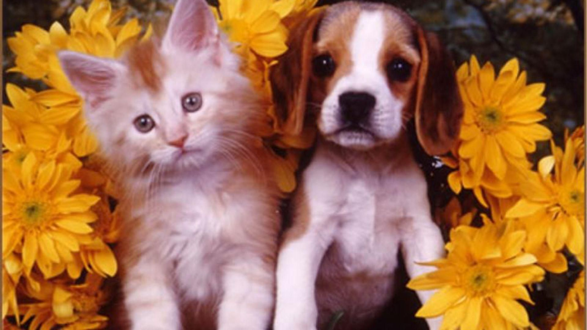 Kitten And Puppy Wallpapers Group x