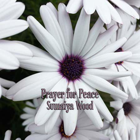 Prayer for Peace #affirmativeprayer