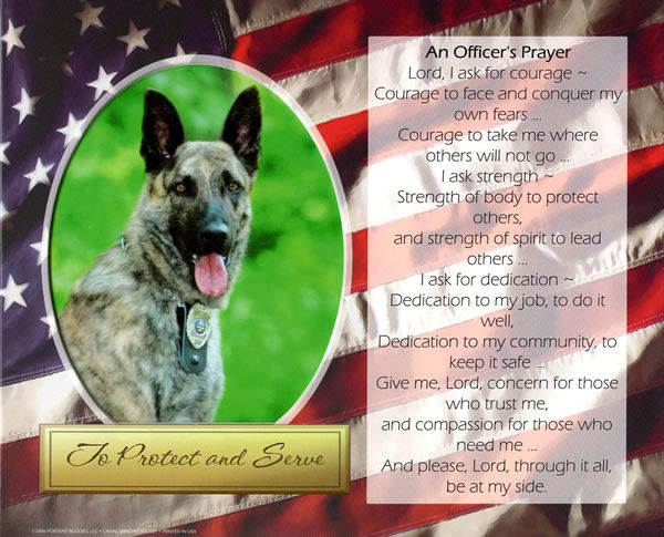Bosco The Police Dog Police Dogs Veterinary Medicine Dog Names