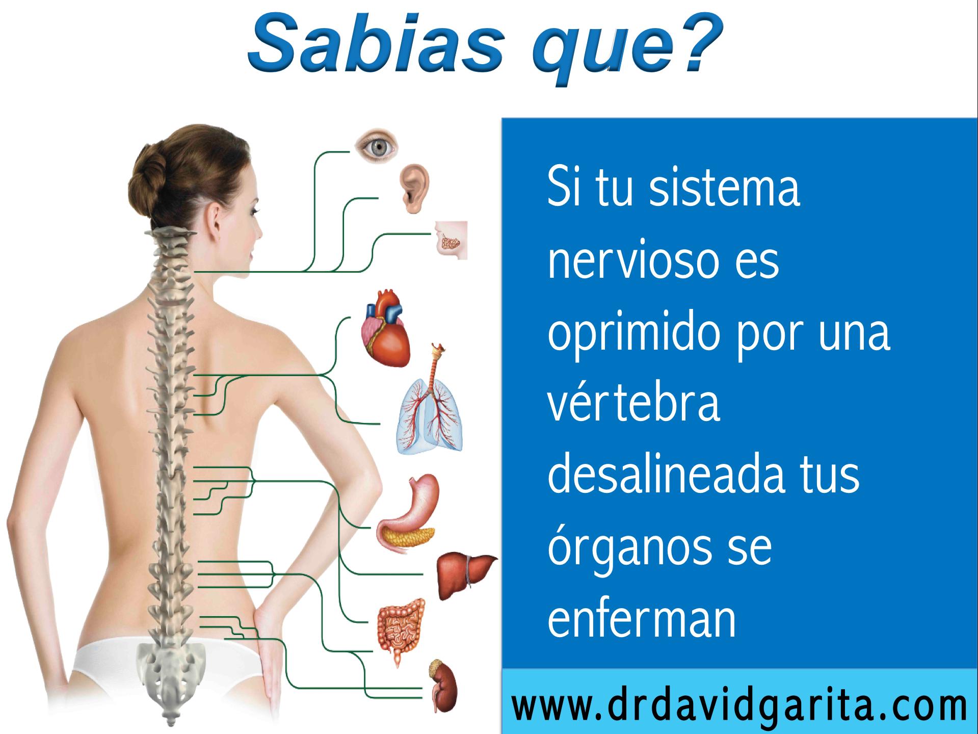 Cuida tu sistema nervioso y su conexión hacia tus organos con ...