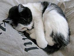 Vår goa katt Maja