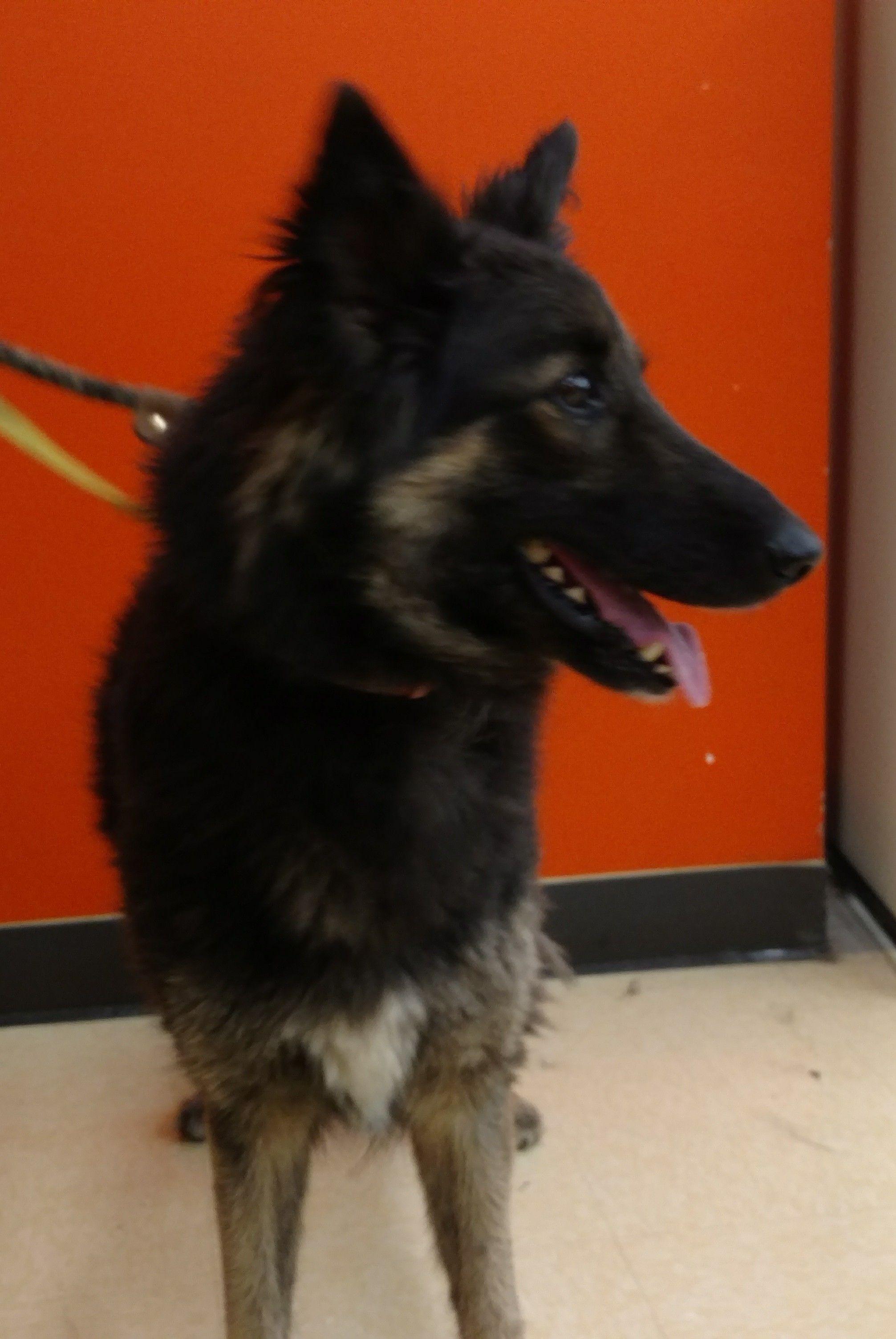 Adopt Nala II on Dog pounds, Animals beautiful, Pet adoption