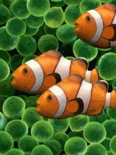 Tropische Vissen Tropische Vissen Vissen Tropisch