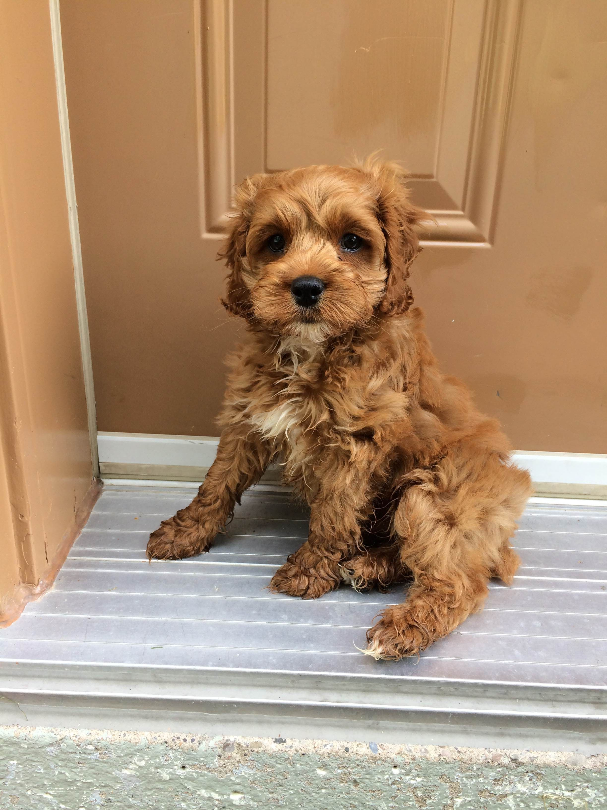 Here is my new puppy Remy! He sits by the door when he is