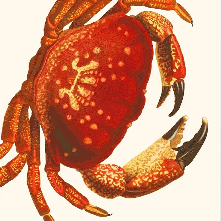 Mud Crab Art Print