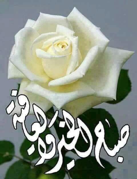 صباح الخير والعافية Morning Images Rose Flowers