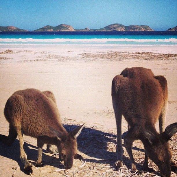 Lucky Bay Western #Australia    Photo by seeaustralia