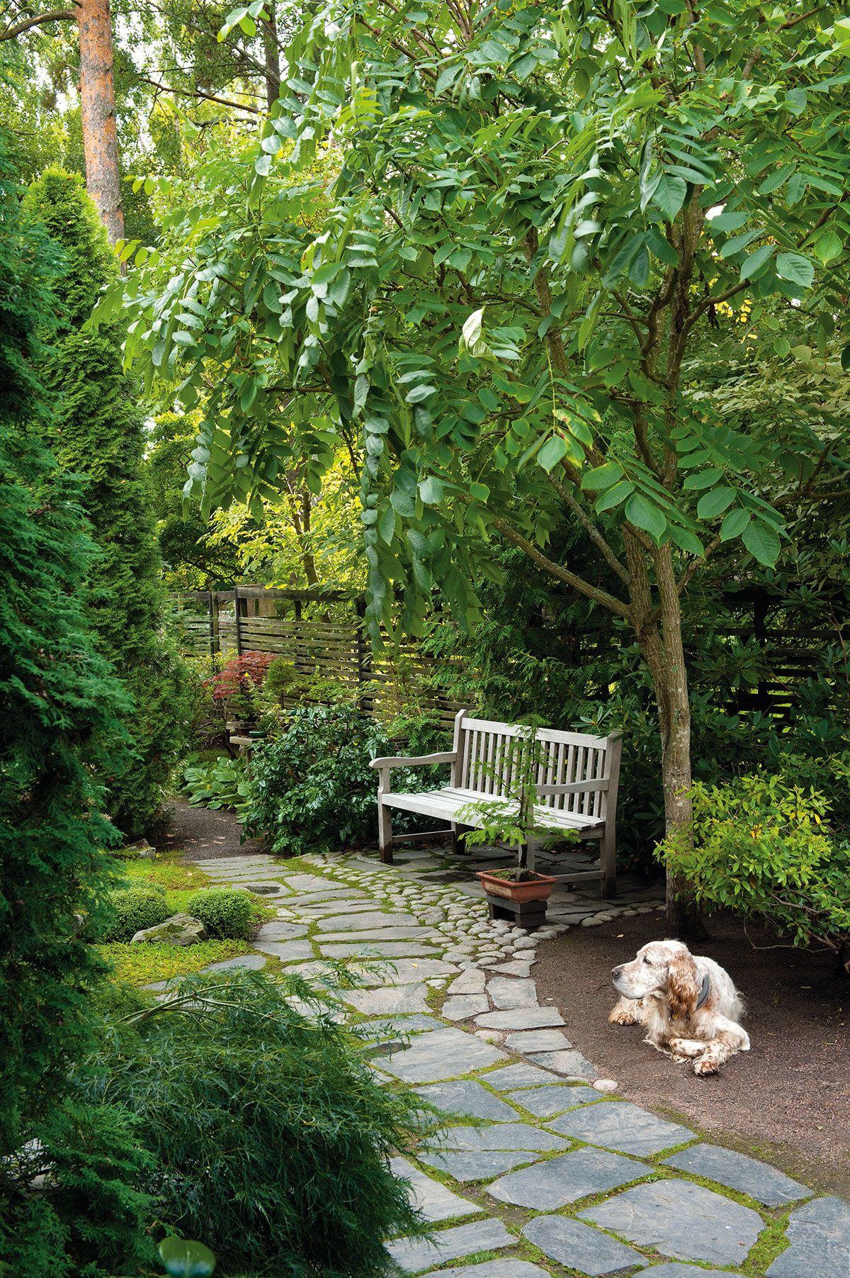 Mantsurianjalopähkinä omaa komeat lehdet. Puusta saa nopeasti komean…