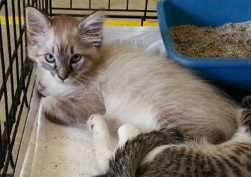 Sapa San Antonio Pets Alive Adopt A Cat Cat Adoption Cats Adoption