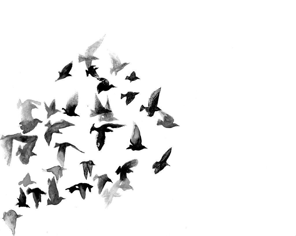 Flock birds unison pattern flying soring shapes flight flock birds unison pattern flying soring shapes jeuxipadfo Gallery