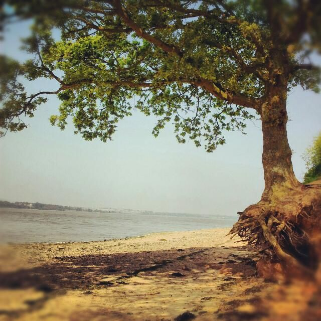 Wrabness Essex tree and beach