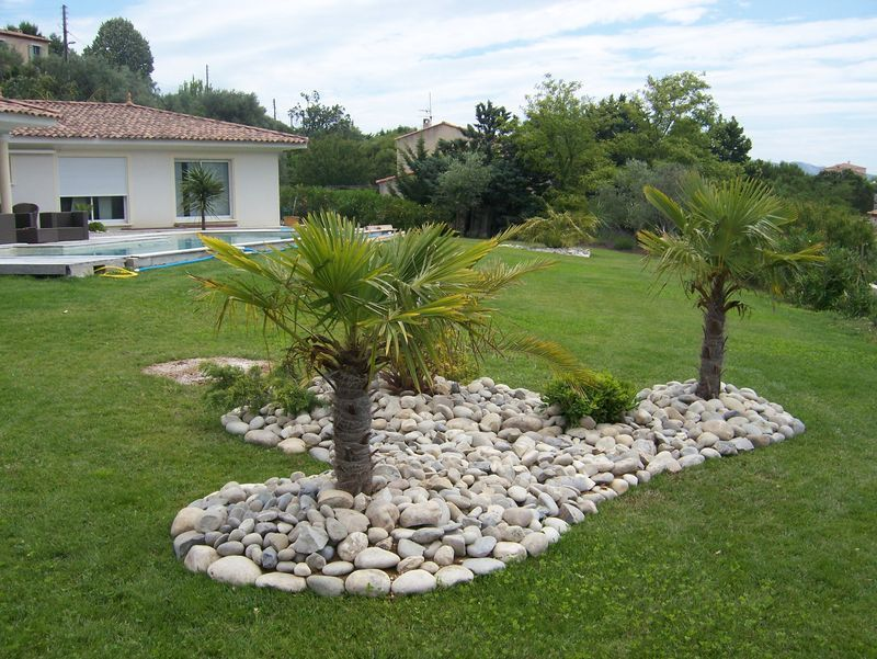 Massif Avec Palmier Recherche Google Jardin Exotique Jardins