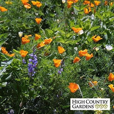 Having problems with deer eating flowers in your garden?  If the answer is Yes, this mix is for you!  This mix contains a colorful blend of 17 different wildflowers that deer usually stay away from.  The mix will burst with annual color just 6 weeks after planting including Red Poppy and Arroyo Lupine.  This mix also includes 7 hardy perennial varieties that will begin blooming in the second growing season.