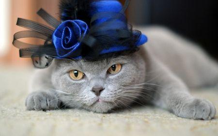 Cute Lady - Cats Wallpaper ID 1818909 - Desktop Nexus Animals